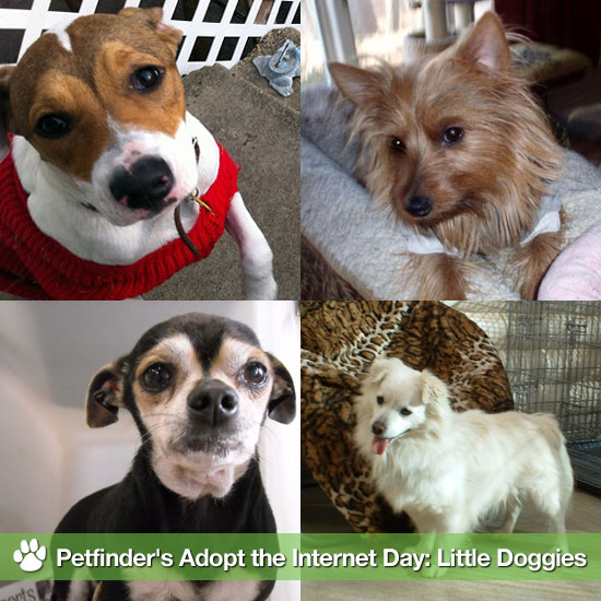 Petfinder's Adopt the Internet Day: Little Doggies