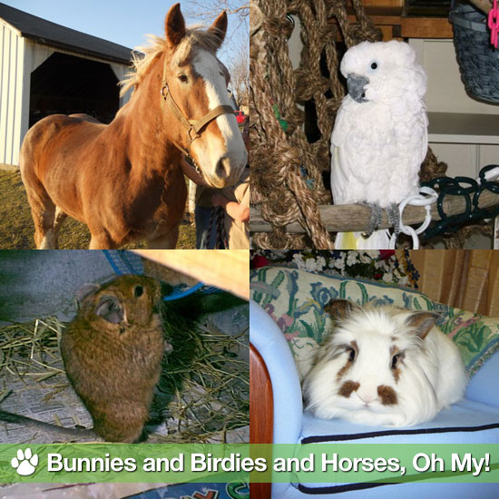 Petfinder's Adopt the Internet Day: Bunnies & Birdies & Horses, Oh My!