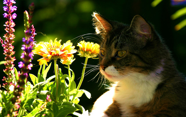 What's prettier, me or the flowers? Source: Flickr user nappent