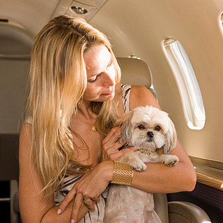 Cheapest Airline to Fly With Pet