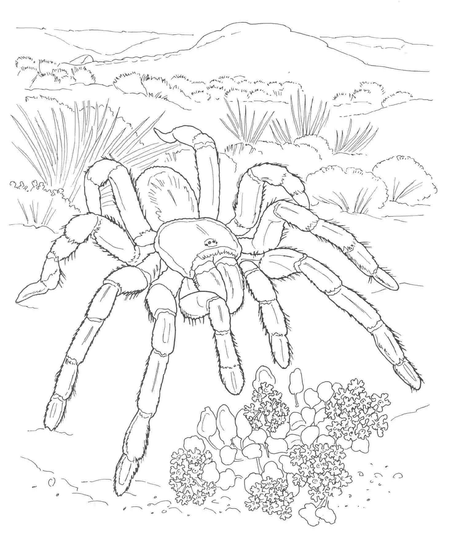 Free Kids Dessert Coloring Pages Desert Animals Coloring Pages