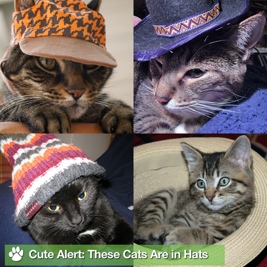 Cute Alert: These Cats Love Hats