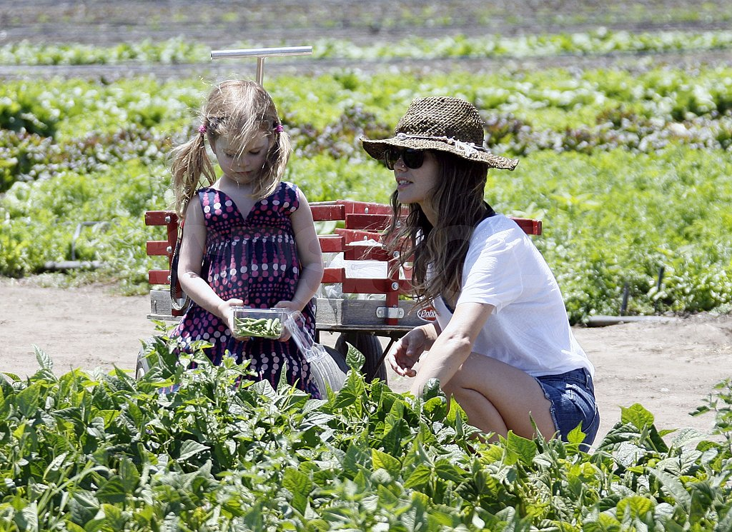 Rachel Bilson helped her sister pick fruits and veggies.