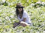 Rachel Bilson surveyed the farm.