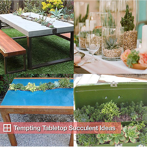 Succulent Tables and Table Arrangements