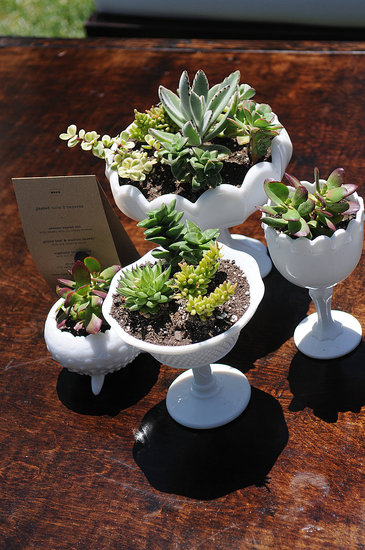 CasaSugar Community member Saittica contrasted the antique look of milk glass with the modern look of succulents at her wedding reception. Gorgeous, aren't they?
