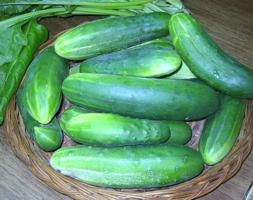 A Bountiful Harvest from Our Vegetable Garden