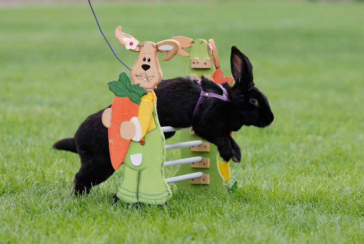 Hop It Up With These Talented Rabbits