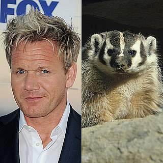 Gordon Ramsay's Porn Dwarf Twin Eaten by Badger