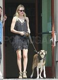 Kate Bosworth helped her pooch to the car.