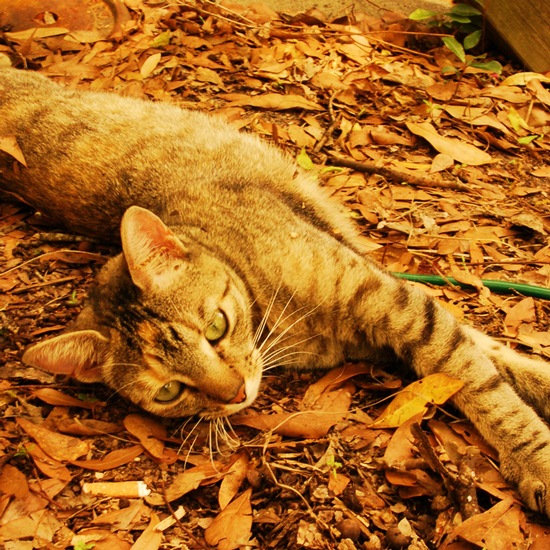 10 Cats Get a Kick Out of Lovely Autumn Leaves