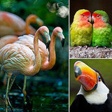 Beautiful Birds From El Nido Aviary