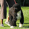 Michelle Obama and Bo at the White House