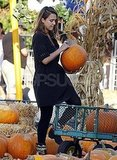 Jessica Alba picks pumpkins in LA.