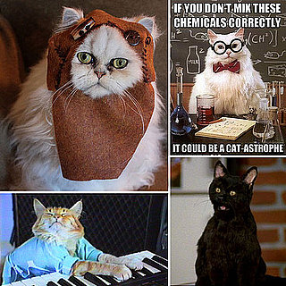 National Cat Day Geek Pictures