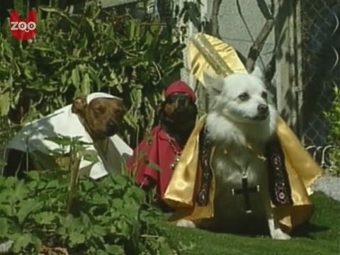 Dogs Dressed Like The Pope!