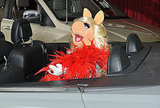 Miss Piggy wore a red boa.