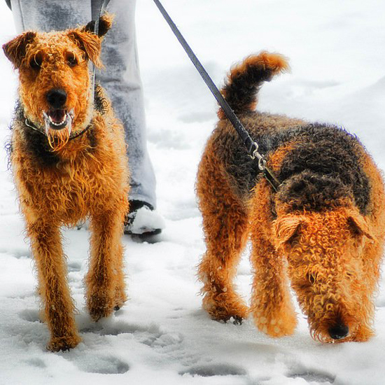 5 Doggie Routines For Winter