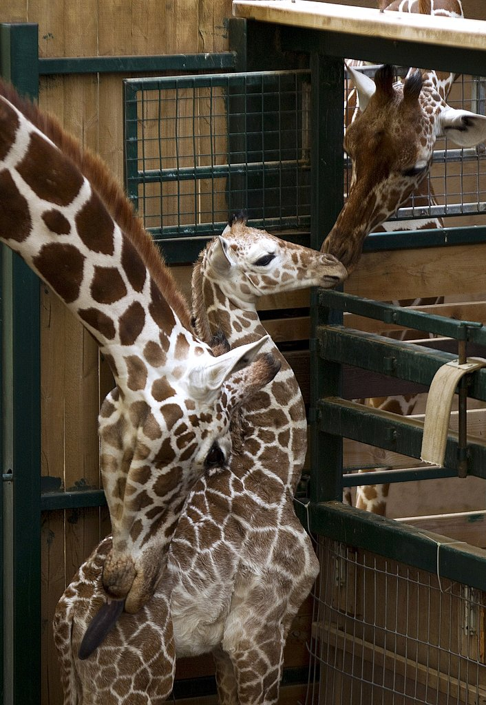 Dad pokes his head around to check on the baby.