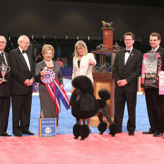 Photos of 2011 AKC/Eukanuba National Championship Dog Show