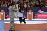An Affenpinscher known as Joe (GCH CH Banana Joe V Tani Kazari) was hardly average in his division, the Toy group. Source: AKC/Robert Young