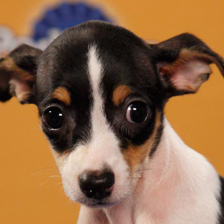 Puppy Bowl's New Lineup Bowls Us Over With Cuteness