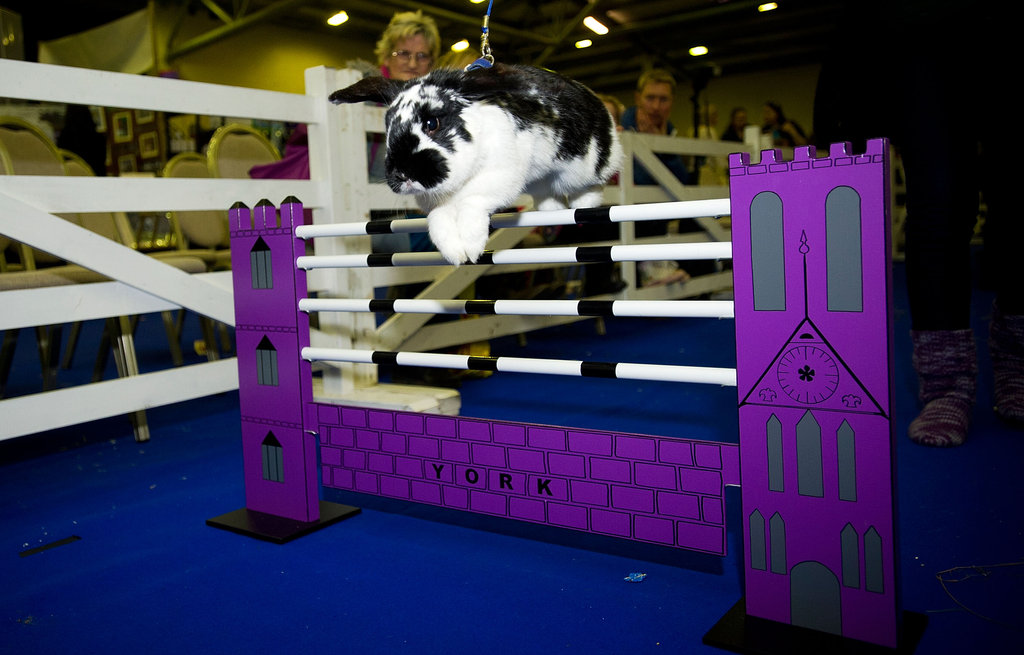 2012 Rabbit Grand National