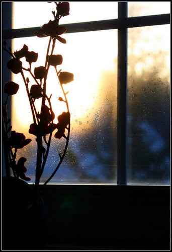 Artificial flowers add color during winter months - by the stairway window