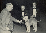 Bedlington terrier Ch Rock Ridge Night Rocket won in 1948. Source: American Kennel Club Archives