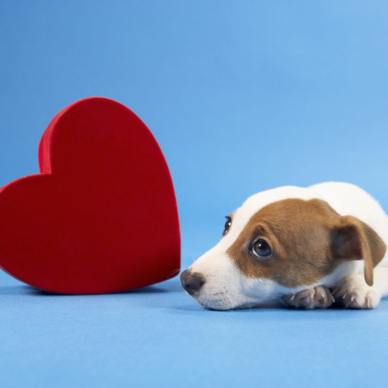 Valentine's Day Gifts, Clothing, and Treats For Pets