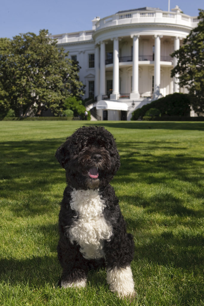 White House Top Dog