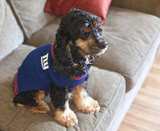 The Super Bowl champs' biggest fan. Source: Flickr user neil conway