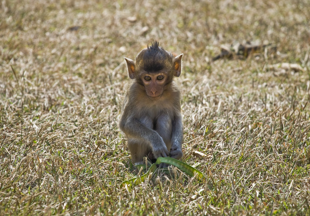 I know, I know: no monkey business allowed. Source: Flickr user Dane Low