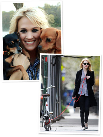 Celebrity Pets:Hollywood's hottest with their favorite (furry) companions!