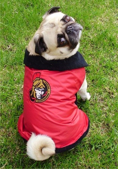 Senators Pug