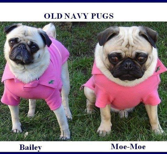 Old Navy Pugs