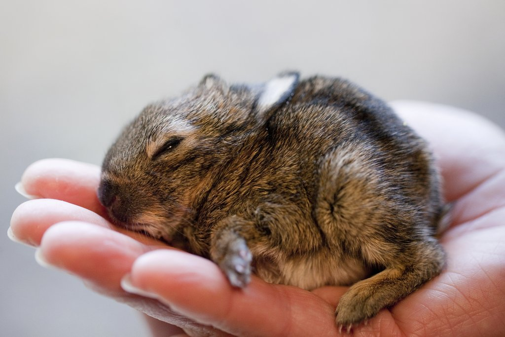 Ruediger, the baby rabbit, was found in a dung pile at the Muenster Zoo!