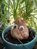 Googly Eyes Gardener