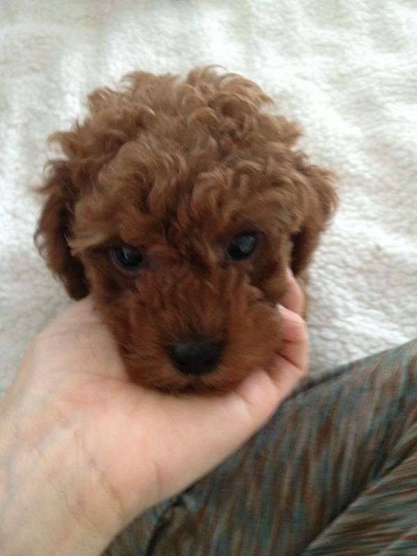 Kristin Cavallari posted a pic of her new puppy.  Source: Twitter user KristinCav