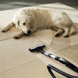 10 Powerful Pet Hair Vacuums (Even on Hardwoods)!