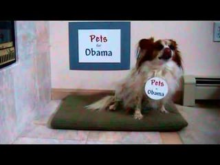Are Your Pets Howling For Hillary or Sitting For Obama?