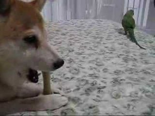 It's a Toss Up: Dog (Sort of) Shares Rawhide with Bird