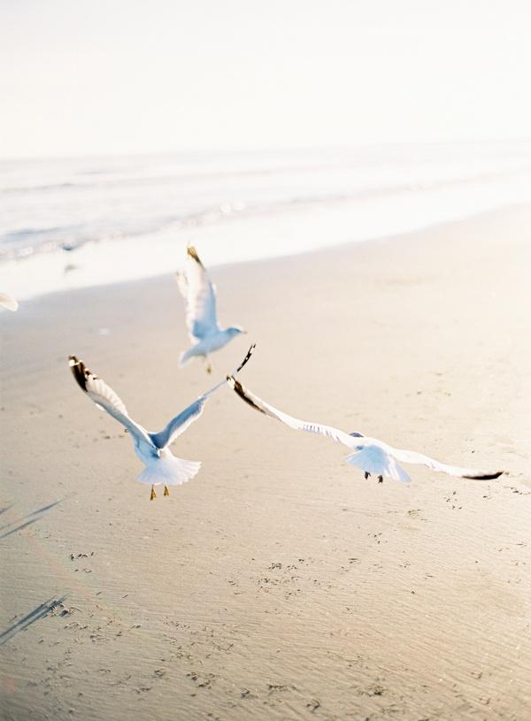 terrablack :: Leisure :: Beachside Lounging