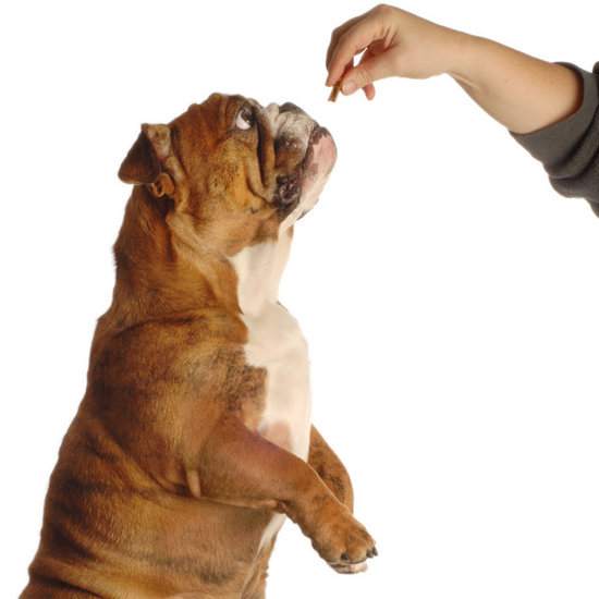 Are Cat Treats Harmful For Dogs