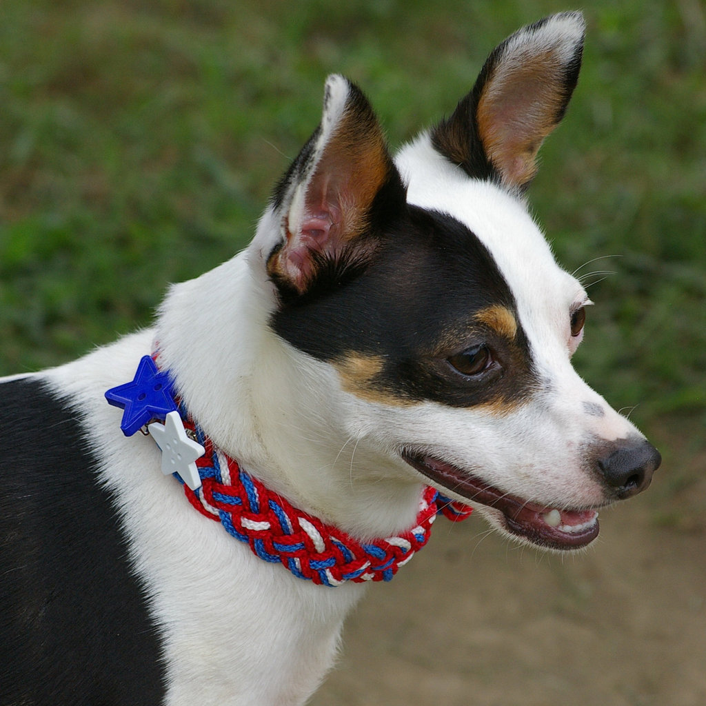 Patriotic Braided Dog Collar ($35)
