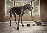 Zeus: The Tallest Dog