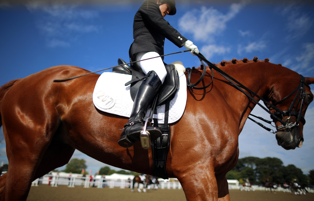 Shiny coats are a must have in the dressage ring.