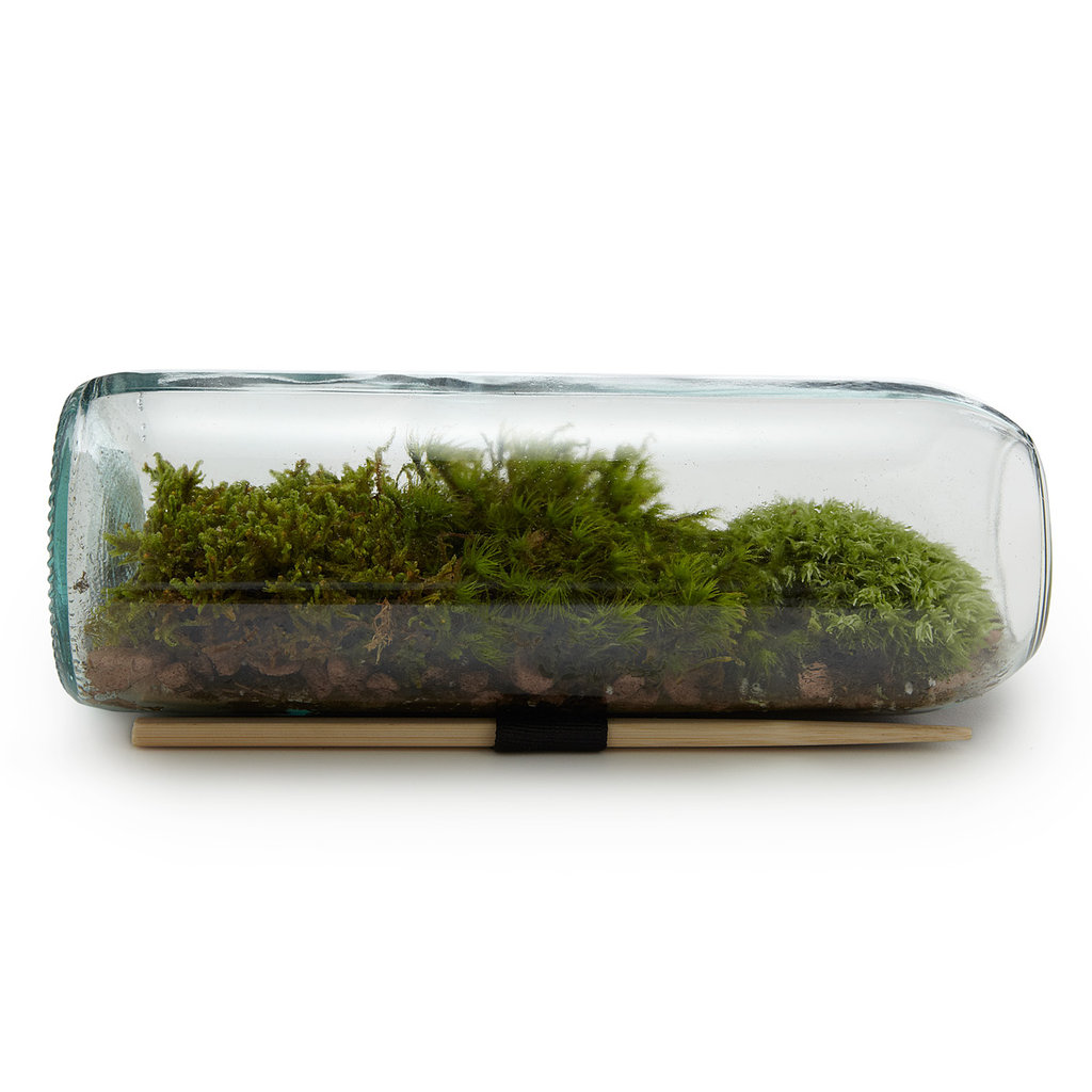 Keep a little bit of nature atop your desk in a Moss Terrarium Bottle ($38) made from a recycled wine bottle.