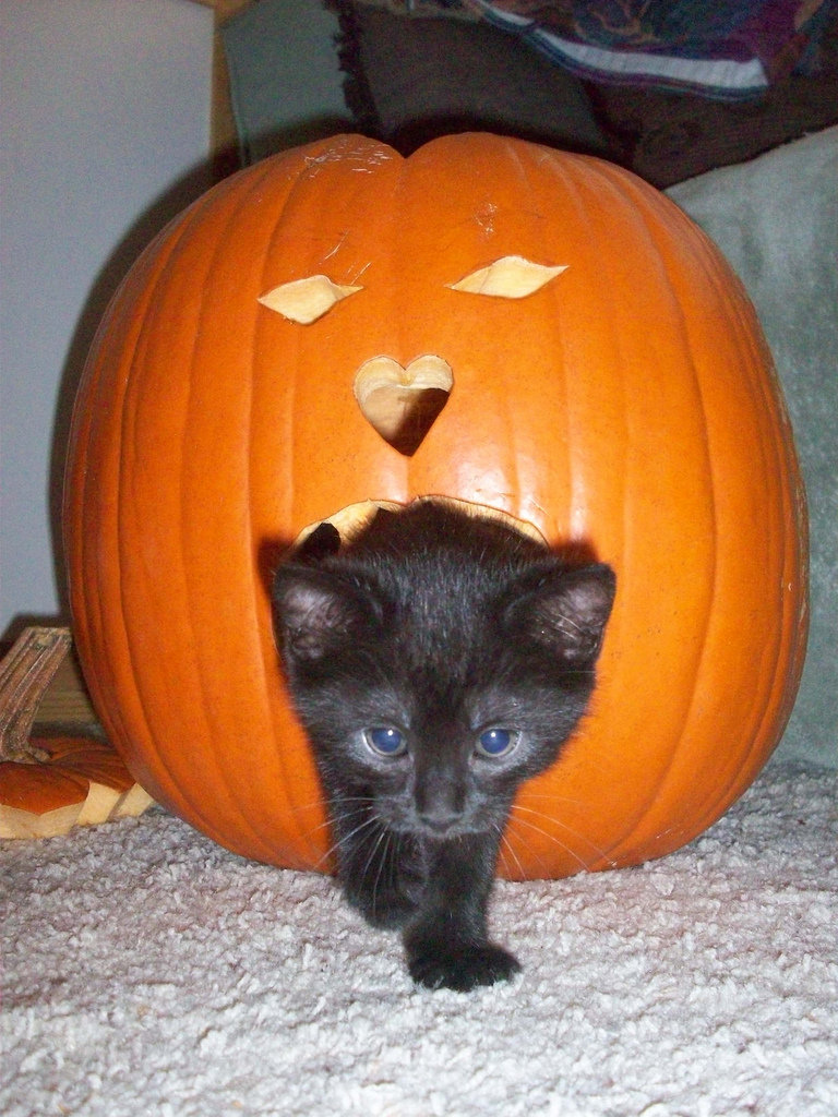 Cute Cats With Pumpkins