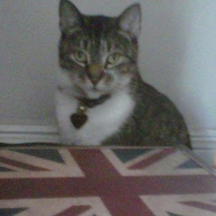British Kitty
